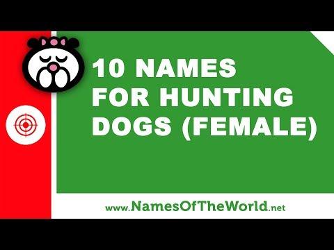 10 Names For Hunting Dogs (female) -  The Best Pet Names - Www.namesoftheworld.net