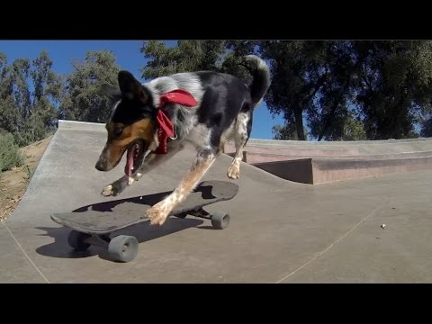 These Dogs Love To Skateboard
