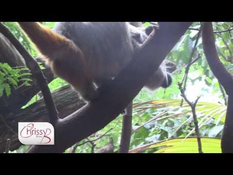 London Zoo - Meet the Animals Experience
