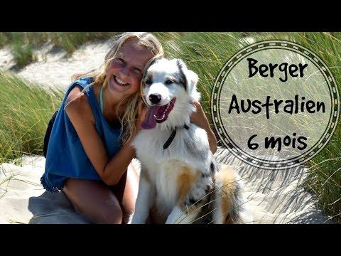 berger australien 6 mois — SummerTime