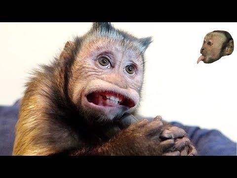Monkey vs Vacuum!