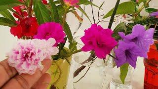 7 Plantas Com Flores Diurnas Para Seu Jardim