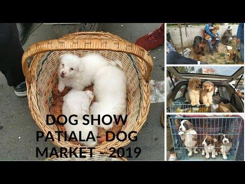 Dog Show Patiala 2019 - Dog Market - Bhola Shola