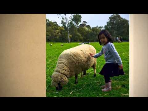 Collingwood Children's Farm Melbourne