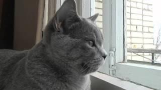 Как мой кот реагирует на птиц.