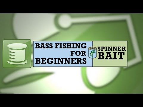 Bass Fishing for Beginners: Spinnerbait