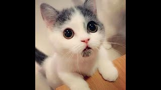20 самых милых кошек и котят