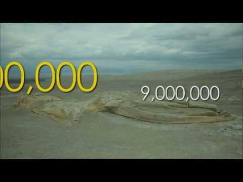 Whale Evolution vs Population Genetics - Can