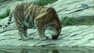 Popular Videos - Zoo Zürich & Birds