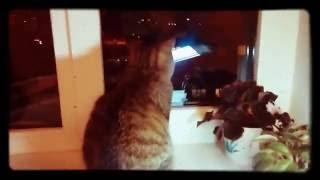 Клички кошек на немцком
