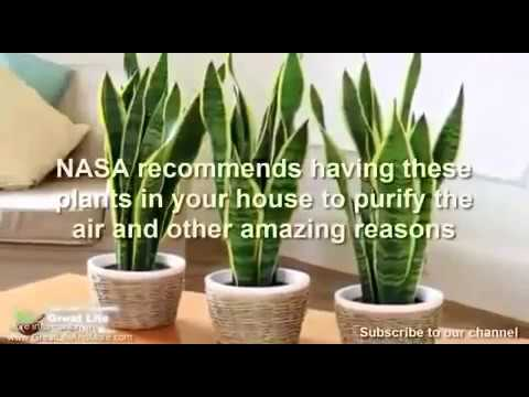 NASA Recommends having this plants in your home !