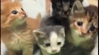 Смешные кошки, котята - 12, подборка 2013-14