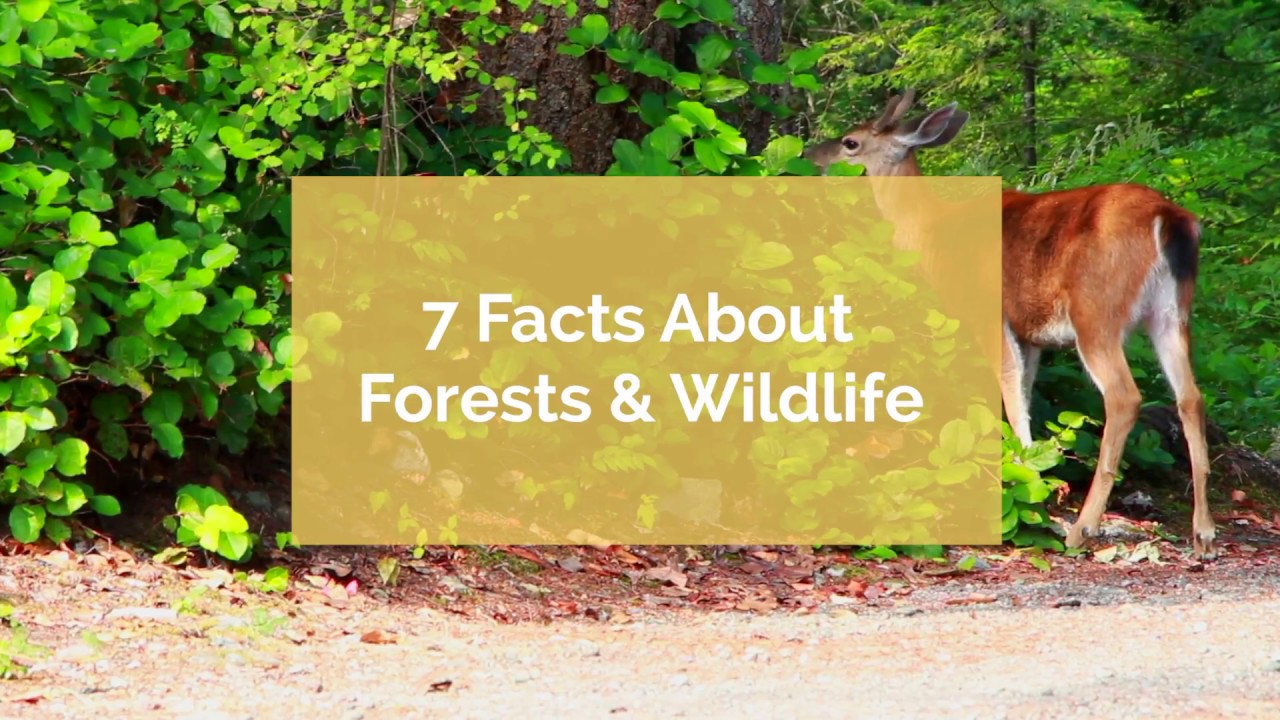 7 Facts About Forests and Wildlife