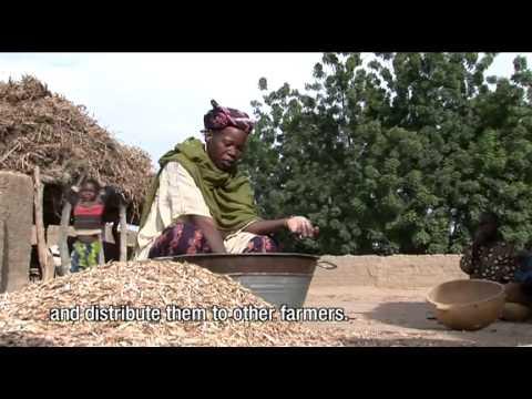 Arouna Bayoko Rural Economic Department (AMEDD) - Cinzana, Mali