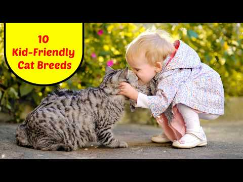 10 Kid-Friendly Cat Breeds | Animals Unlimited | Sameer Gudhate