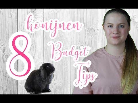 8 Konijnen budget tips! #BunnyBasic's2 l BUNNBUNN