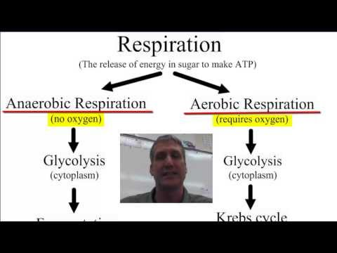 Anaerobic vs Aerobic Respiration