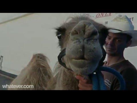 Geico Hump Day Camel Toe Remix Steve Corneliussen Video Free