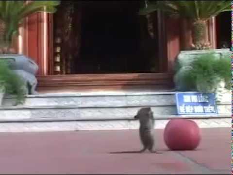 chuột chắp tay lạy Phật (tin hay không tùy bạn).flv