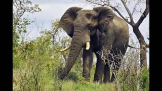 Животные Африки-2