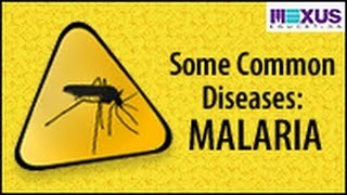 Some Common Diseases: Malaria