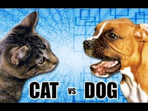 Cats vs Dogs ( in real life) WARNING ( super cringy )