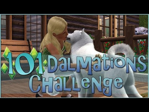 A New Stray Dog for the Pet Rescue!! • Sims 3: 101 Dalmatians Challenge  - Episode #92