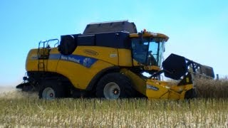 Żniwa rzepakowe 2012 - New Holland CX8060 / Ursus 914 / Autosan / BSS