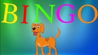 BINGO song | Kids Songs | Picaboo