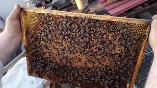 Уроки для начинающих пчеловодов.