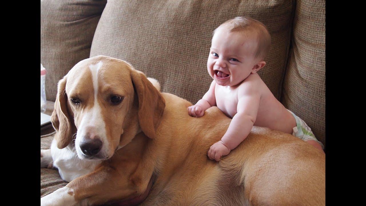 Köpekler ve bebekler bir arada