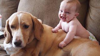 Birlikte oynamak sevimli bebekler ve köpekler  komik bebek