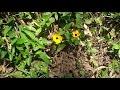 Miniature de la vidéo de la chanson O Poeta Aprendiz
