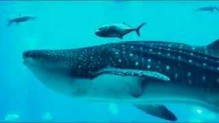 Самый большой аквариум в мире, США Атланта