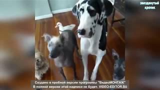 Смешные видео про животных 2