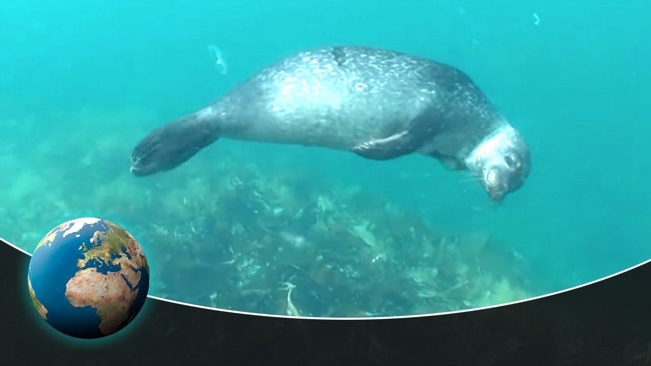 Amazing nature: Natural swimmer