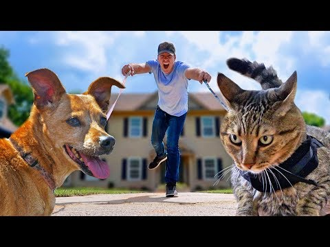I Let My Cat & Dog Walk Me For A Day - CAT vs DOG Challenge