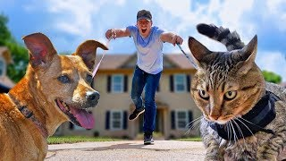 I Let My Cat & Dog Walk Me For A Day - CAT vs DOG Challenge