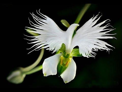 САМЫЕ НЕОБЫЧНЫЕ ДИКОВИННЫЕ ЦВЕТЫ красивые и их названия Unusual flowers
