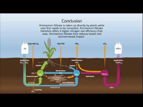Nitrogen Cycle In The Soil