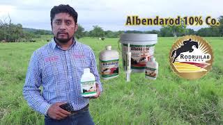 Eliminación de Parasitos en Novillos de pastoreo // El Bramadero TV Agropecuario