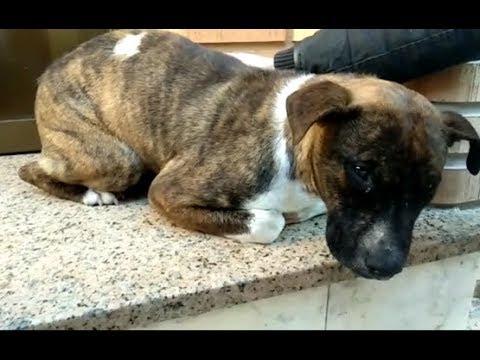 Siba: último caso de maltrato animal en Albacete, con resultado de muerte