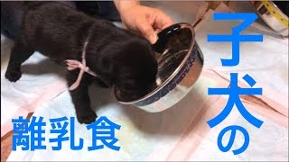 昨年4月に7頭の子犬を出産したときのものです。 今年、繁殖犬として最後...