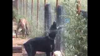 Зоогостиница «Лесси» 2005-2006г. Зоогостиница для собак, кошек и других домашних животных