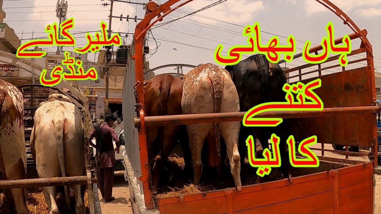 Kitne Ka Liya - Malir Mandi Karachi