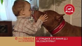 ПИТ ПРАЙТ порода ПРАЙТЕР