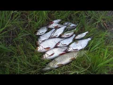 Ловля рыбы на удочку летом . - YouTube