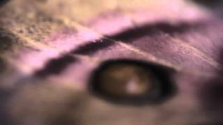Illamasqua Once Collection Teaser Part 1 - Moth Thumbnail