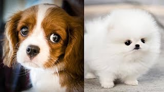 Cute baby animals Videos Compilation #2