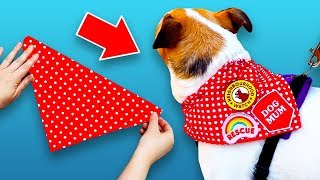 3 DIY Crafts Your Dog Will Love